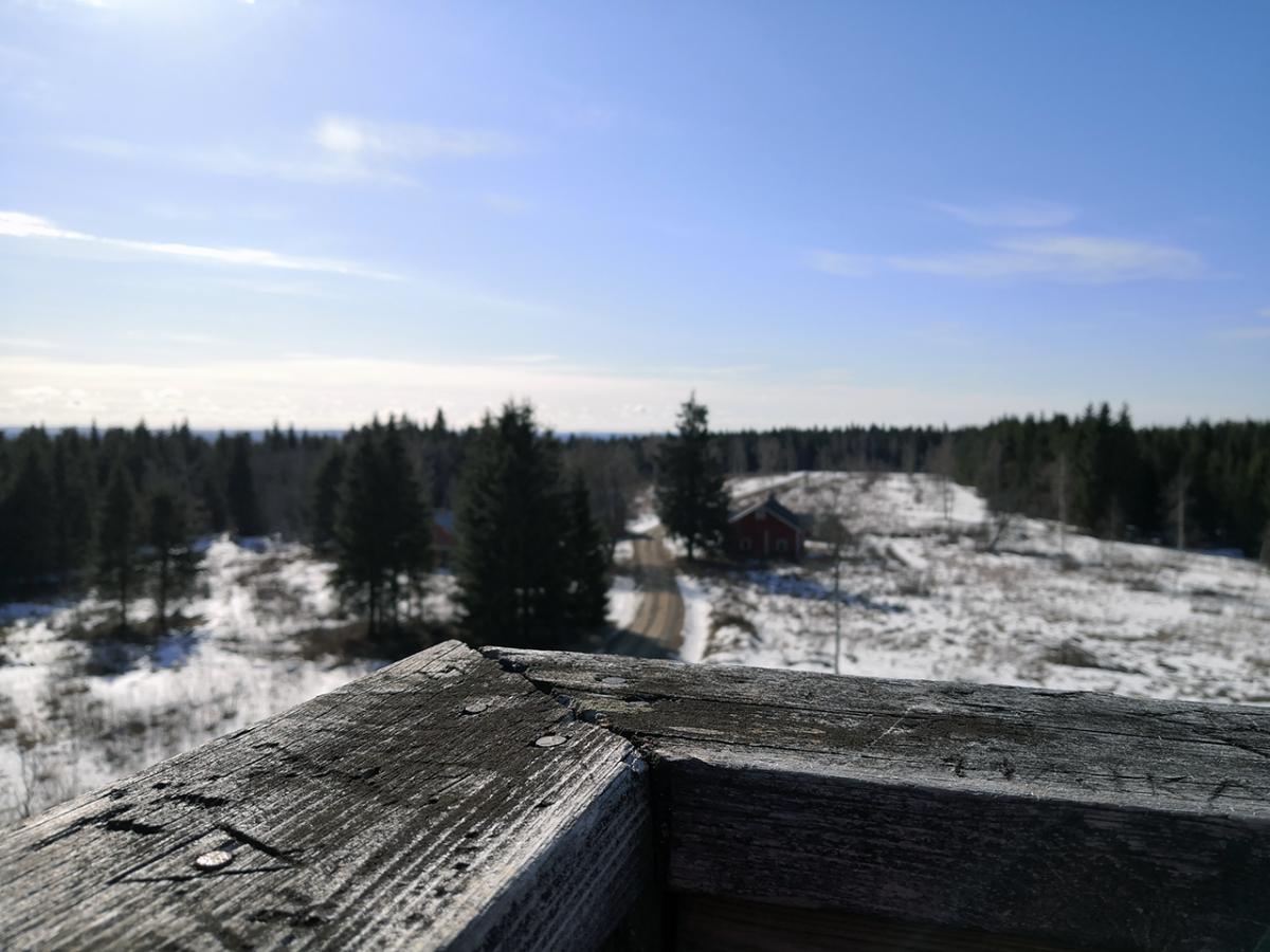 Tammimäki ja Leivonmäen kansallispuisto 23.3.2020
